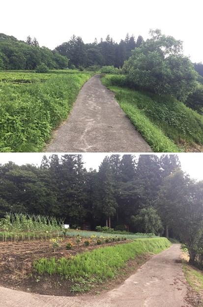 岩櫃城(東吾妻町)天狗丸