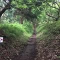岩櫃城(東吾妻町)竪堀?