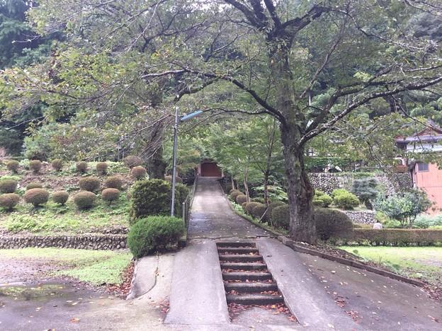 大光山 吉祥寺(西多摩郡檜原村)参道