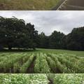 Photos: 深大寺城(調布市。都立神代植物公園)