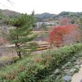小幡陣屋・楽山園(甘楽町小幡)庭園