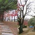 Photos: 鳥羽・伏見合戦古戦場(伏見区)鳥羽離宮跡