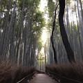 Photos: 嵯峨野 竹林の道(右京区)