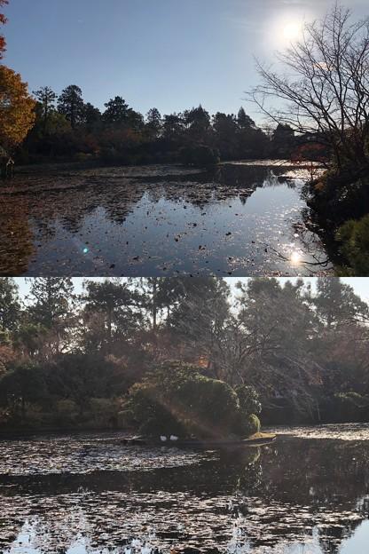 龍安寺(右京区)鏡容池・伏虎島
