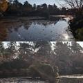 Photos: 龍安寺(右京区)鏡容池・伏虎島