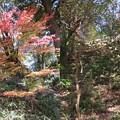八幡山城(近江八幡市)上は本丸