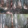 Photos: 八幡山城屋敷(秀次館。近江八幡市営 八幡公園)家臣団館群