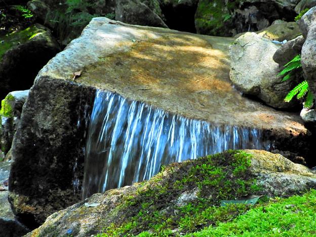 写真: シダに木漏れ日