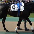 Photos: ロゴタイプ(2回東京12日 10R 第80回 東京優駿 日本ダービー(GI)出走馬)