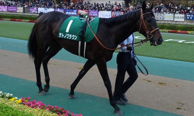 サトノクラウン(5回東京7日 11R 第19回 東京スポーツ杯2歳ステークス(G?)出走馬)