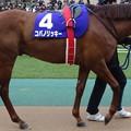 コパノリッキー(1回東京8日 11R 第32回 フェブラリーステークス(GI)出走馬)