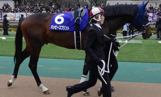 ハッピースプリント(1回東京8日 11R 第32回 フェブラリーステークス(GI)出走馬)
