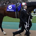 Photos: ハッピースプリント(1回東京8日 11R 第32回 フェブラリーステークス(GI)出走馬)