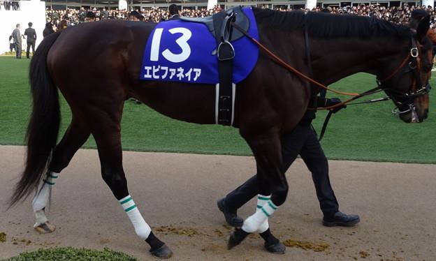 エピファネイア(4回中山8日 10R 第59回グランプリ 有馬記念(GI)出走馬)