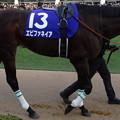 Photos: エピファネイア(4回中山8日 10R 第59回グランプリ 有馬記念(GI)出走馬)