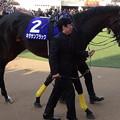 Photos: キタサンブラック(5回中山8日 11R 第62回グランプリ 有馬記念(GI)出走馬)