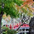 写真: 朱塗りの橋~
