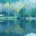 写真: 白馬のいる光景1-1