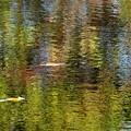 写真: 水面