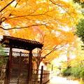 秋の栗林公園で。