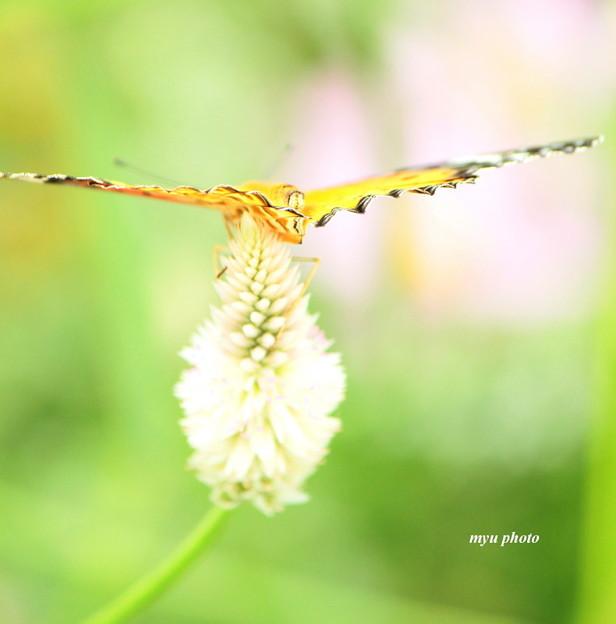 写真: 羽コプター