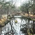 北大研究林を流れる小川の風景