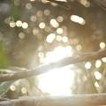 光の中へ・・・