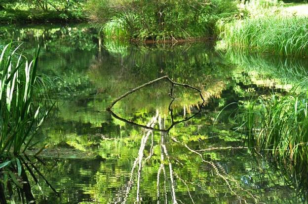 北大研究林の鏡池