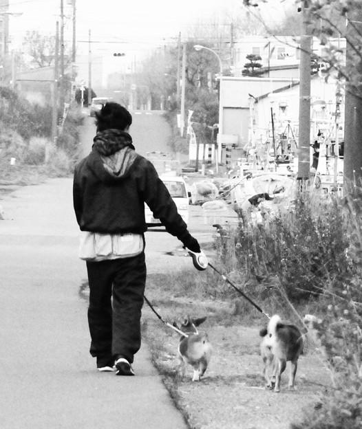 2匹の犬の散歩