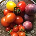 Photos: 本日の収穫