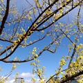 写真: 木の芽時