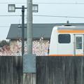 桜とJR五日市線2