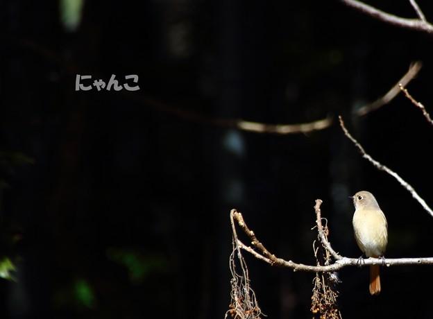 Photos: ~愛しの君~