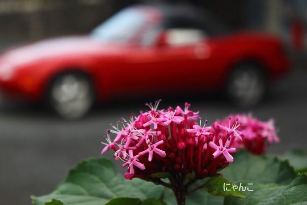写真: ~ドライブ、する?~