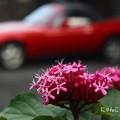 Photos: ~ドライブ、する?~