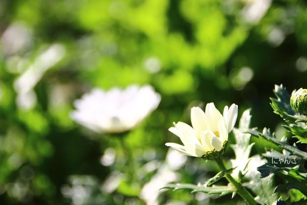 ~花開く時~