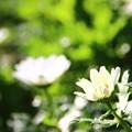 写真: ~花開く時~