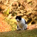 写真: ~紅葉猫~