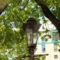 写真: ガス灯に楠木