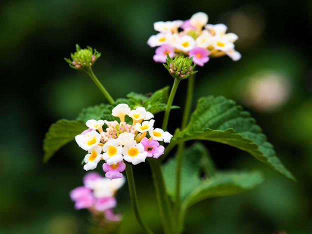 Photos: かわいい花