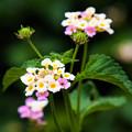 写真: かわいい花