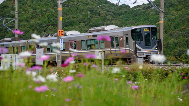 写真: ベタな秋の鉄道