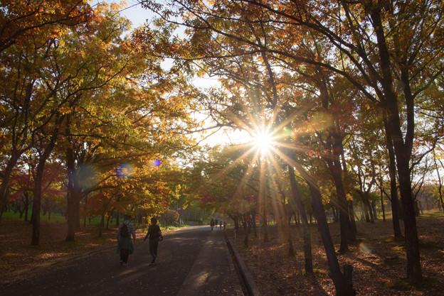 写真: 秋の木漏れ日