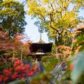 写真: 秋の石山寺