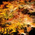 Photos: 闇夜に…