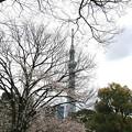 写真: 東京 下町 隅田公園