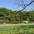 写真: 新緑 東京 小石川植物園