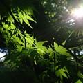 写真: 陽射し