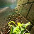 写真: 道端の秋