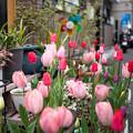 写真: 谷中散策 下町の花